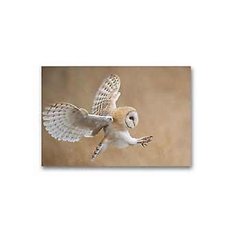 Barn Owl I Flight Before Attack Poster -Bilde av Shutterstock