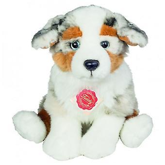 Hermann Teddy Cuddle cane australiano pastore cucciolo