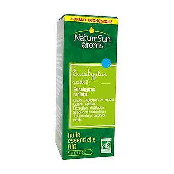 Organic eucalyptus radiata essential oil 30 ml of essential oil