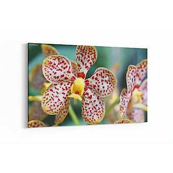 Schilderij - Gele patroonorchidee - phalaenopsis — 100x70cm