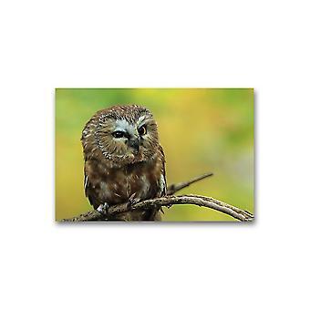 Liten ugle på en gren plakat -bilde av Shutterstock