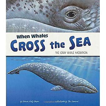 Når hvalerne krydse havet: grå hval Migration (ekstraordinære overførsler)