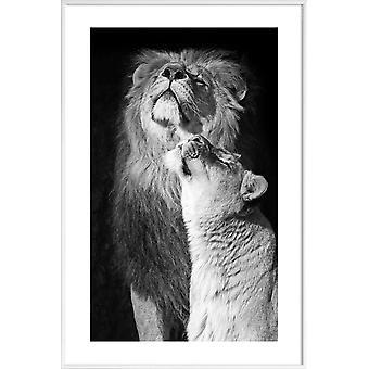 JUNIQE Print -  Lions in Love - Safari-Tiere Poster in Schwarz & Weiß