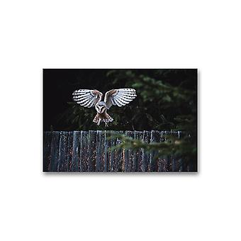 Owl Lading On Fence Poster -Image by Shutterstock