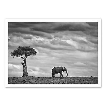 Art-Poster - Olifantenlandschap - Mario Moreno 50 x 70 cm