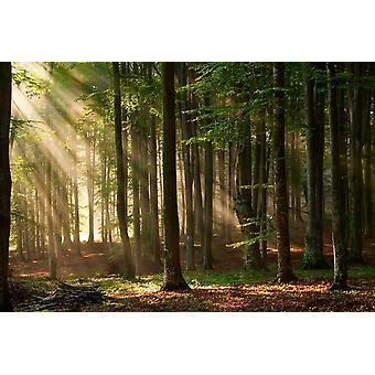 Fondo de pantalla Mural Bosque de Otoño II