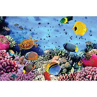 Wall mural coral colony in red sea