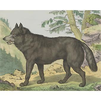 Wolf By Jos Scholz And J Scotti C 1830-80 Dutch Print Lithograph Portrait Of Wolf In A Mountain Landscape Poster Print