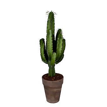 Euphorbia erytrea in brown gray decorative pot with bark - Height 90 - Diameter pot 30