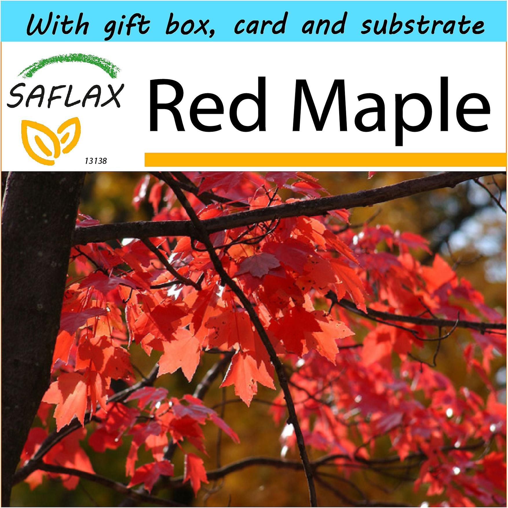 Saflax - Gift Set - 20 seeds - Red Maple - Erable rouge - Acero rosso  - Arce rojo - Rotahorn