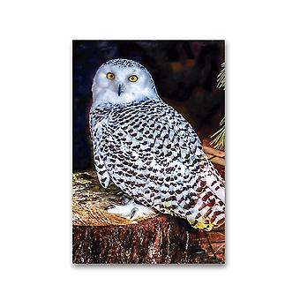 Great White Owl Portrait Poster -Image by Shutterstock