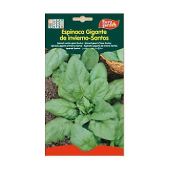 Giant Winter Spinach Seeds - Santo 1 unit
