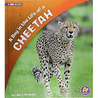 A Day in the Life of a Cheetah: A 4D Book (Day in the Life)