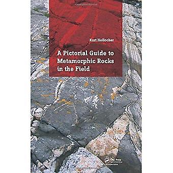 Un Guide des roches métamorphiques dans le domaine pictural