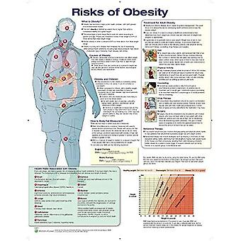 Risks of Obesity Anatomical� Chart Laminated