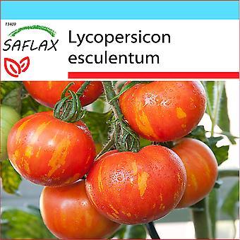 Saflax - Gift Set - 10 zaden - tomaat - Tigerella - Tomate Tigerella - Pomodoro Tigerella - Tomate - Tigerella - Tomate - Tigerella