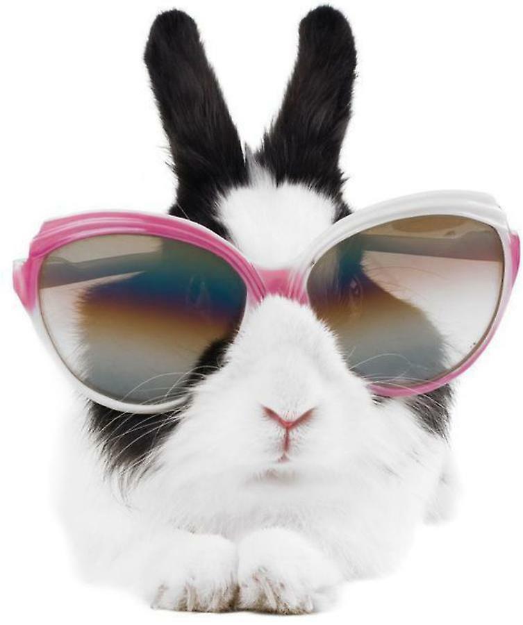 смешные кролики фото стикеры отец доусона объявляют
