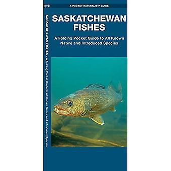 Saskatchewan Fishes (Pocket Naturalist Guide)