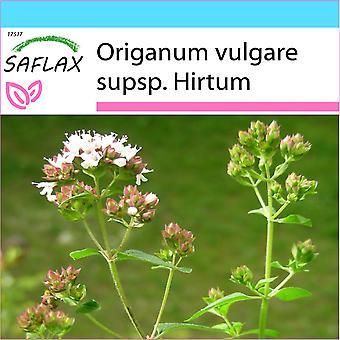 Saflax - Gift Set - 600 zaden - Griekse Oregano - Origan - Origano greco - Orégano griego - Griechischer Oregano
