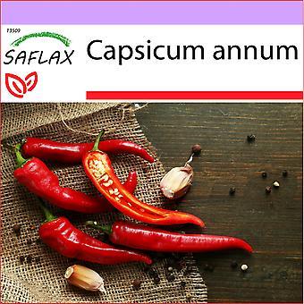 Saflax - 20 semi - peperoncino - De Cayenne - Piment de Cayenne - Peperoncino di Cayenna - cayenne di de Chile - peperoncino - De Cayenne