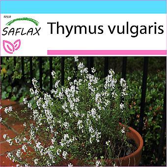Saflax - Set cadeau - 200 graines - thym - Thym commun - Timo - Tomillo - Echter Thymian