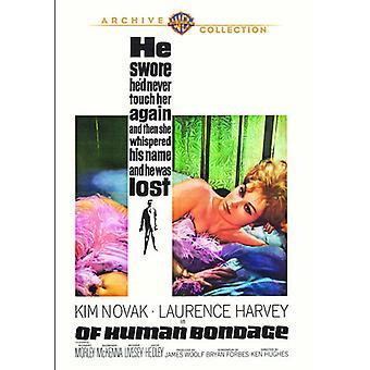 Af menneskelige Bondage [DVD] USA Importer