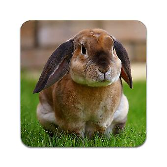 2 ST Rabbit Cub Coasters