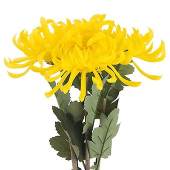 Hill Interiors Spider Chrysanthemum Artificial Flower