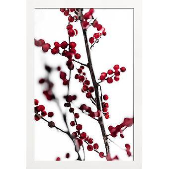 JUNIQE Print - Röda bär 1 - Blad & Växter Affisch i Rött & Vitt