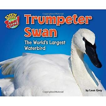 Trumpeter Swan: The World's Largest Waterbird