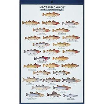 Guides de terrain de l'AMC: Amérique du Nord/saumon et truite