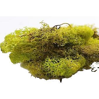 בובות בית בהיר ירוק חזיזית 12s גן אביזר נופי