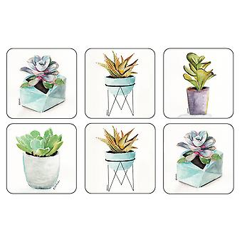 Pimpernel Succulents Coasters, Set of 6