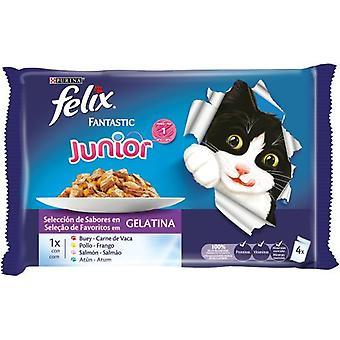 Felix Multipack Assortment  Fantastic Junior in Jelly (Cats , Cat Food , Wet Food)