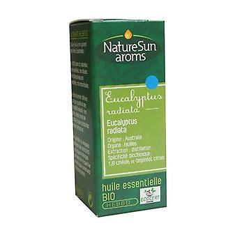 Organic eucalyptus radiata essential oil 10 ml of essential oil