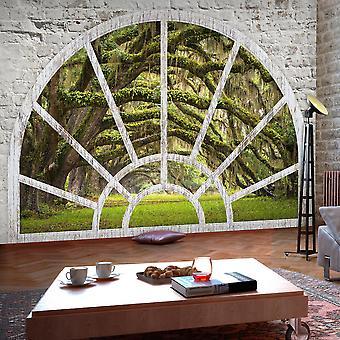Selbstklebende Fototapete - Window to Secret Forest