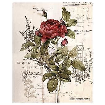 Re-Design with Prima Botanical Rose 24x34 Inch Decor Transfers