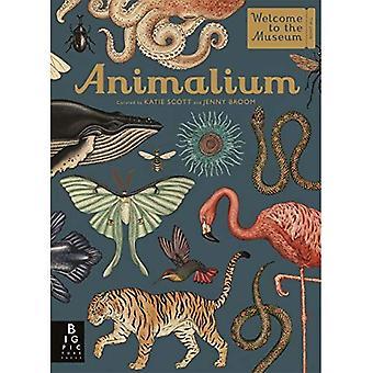 Animalium - bem-vindo ao Museu