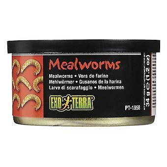 Exo Terra Dosenmehlwürmer Spezialität Reptilienfutter - 1,2 Unzen