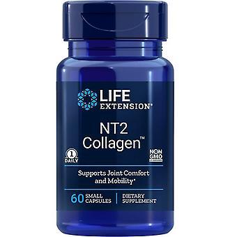 Przedłużenie żywotności NT2 Kolagen 40mg Czapki 60