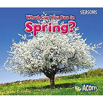 What Can You See in Spring? (Seasons (Heinemann))