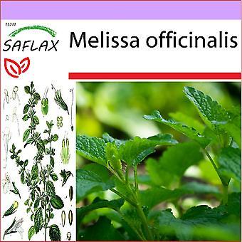 Saflax - 150 graines - mélisse - Mélisse officinale - Erba limoncina - Melisa u hoja de limón - Zitronen - Melisse