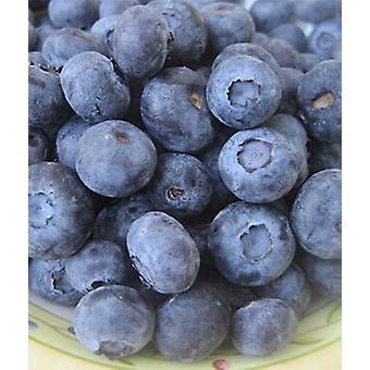 Jewel Blueberry -( 9.99lb Jewel Blueberry)