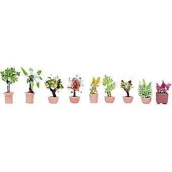 Plantas ornamentais de N de 14082 NOCH