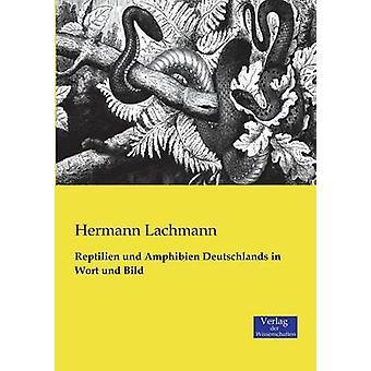 Reptilien und Amphibien Deutschlands in Wort und Bild de Lachmann et Hermann