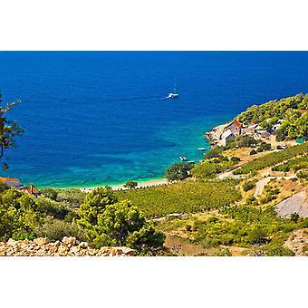 Tapeta Mural Winnica i plaża w malowniczej miejscowości Farska Bay, Chorwacja