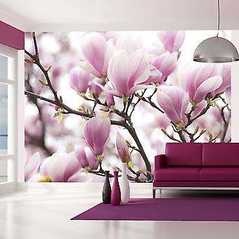 Fotobehang - Magnolia bloosom