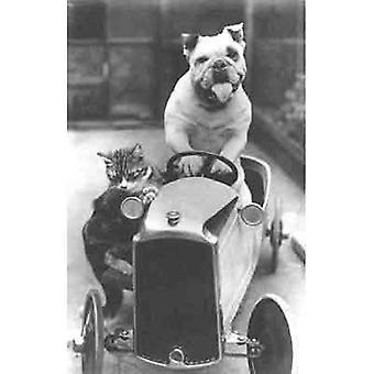 Va-Va-Vroom, Bully and his cat go racing! Greetings Card