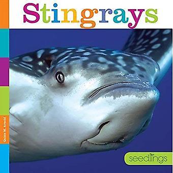 Stingrays (Seedlings)