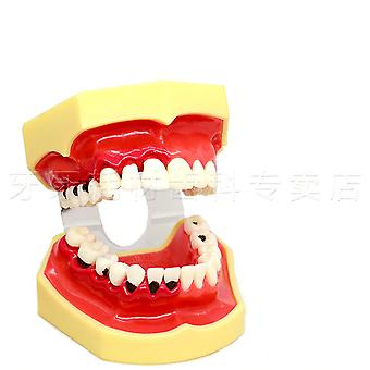 Various Dental Teeth Models For Teaching And Hospital Dentist Material